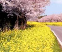Toyota vyčistí a připraví vůz na jaro za výhodné ceny